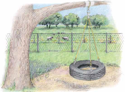 tree with tire swing