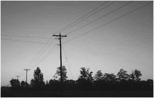 photograph of trees and powerlines