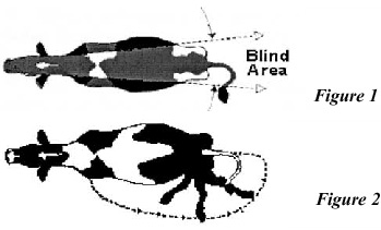 illustration showing bline area for cows