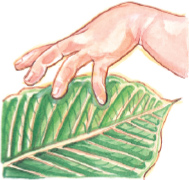 hand touching leaves