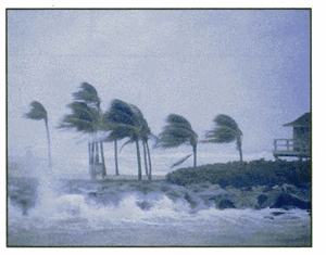 Photo of hurricane strength winds blowing palm trees near the coastline