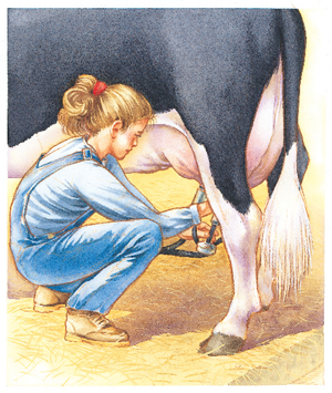 Older child feeding grain to cows
