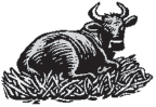 Livestock (male livestock such as bulls, boars, etc.)