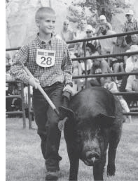 boy with a hog in a competition