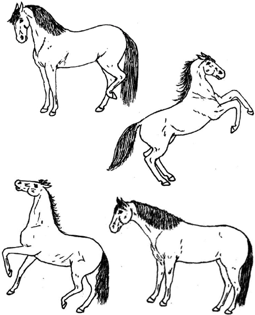 Horses pictures to learn about the body language for safety.