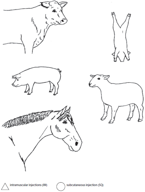 Animal diagrams where a student can mark where an injection could be made.