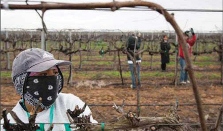 Woman farm worker looking through a fence