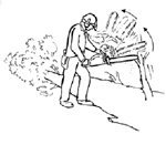 man with chainsaw and fallen tree