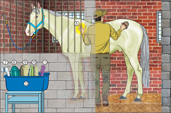 Drawing of a horse and a man in a stall while he is grooming it