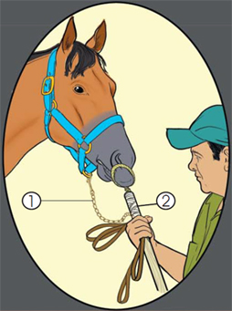 This is how the muzzle of the horse is restrained.