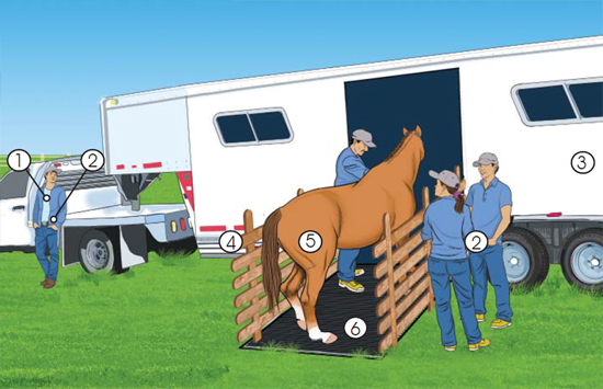 This is a picture of all that is involved in loading a horse into a trailer