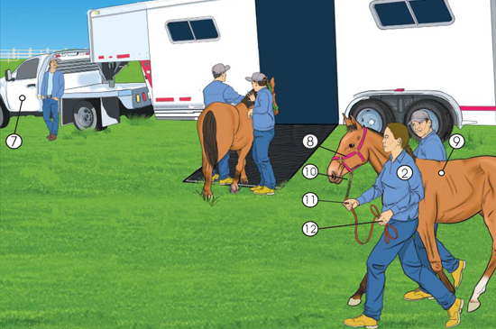 Picture of workers leading a horse up the ramp into the trailer