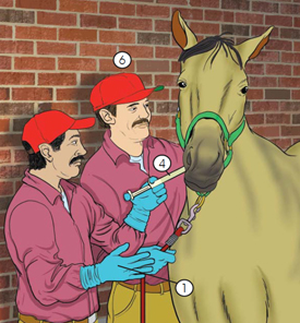 This is picture of men administering oral medication to a horse