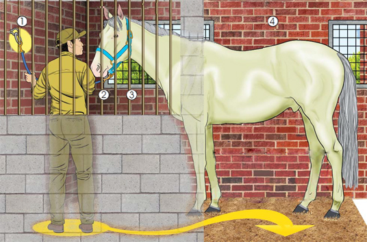 This is a picture of a horse within a stall with a worker