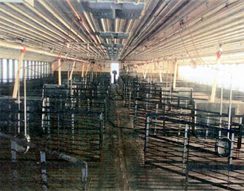 This is a picture of the interior of a swine barn