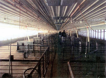 This is a photo of the interior of the swine barn