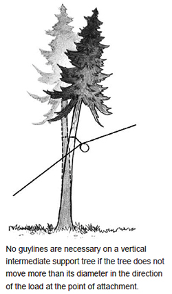 No guylines are necessary on a vertical intermediate support tree if the tree does not move more than its diameter in the direction of the load at the point of attachment.
