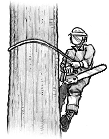 man with a chainsaw who climbed a tree