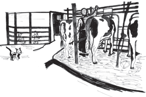 Cows in a barn with a cat children watching