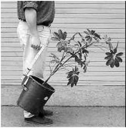 This is a photo of a person hoolding the handle of the lifting tool while they are upright, which is attached to a potted plant, and carrying it in that way.